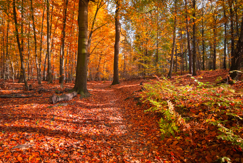 Cosmetiques Automne Theme foret